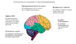 Когнитивные искажения в программировании